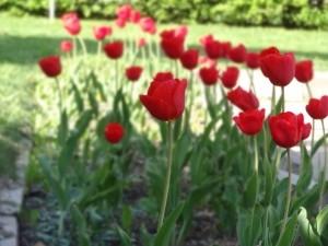 spring-flowers-1444478-m